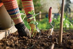 planting-seedling-in-vegetable-garden.jp