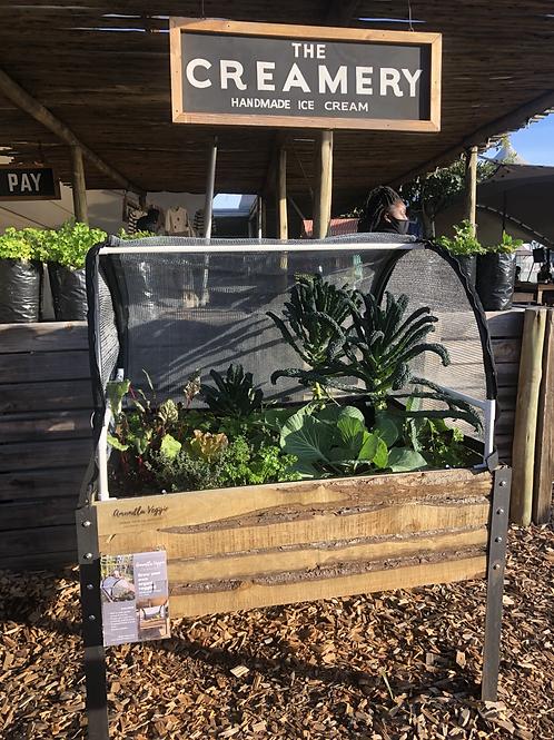 Mini Tunnel + Planter Box