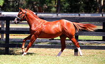 Star Witness x Able 5small.jpg