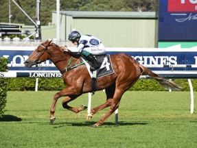 Blazing Miss chasing a third-straight win