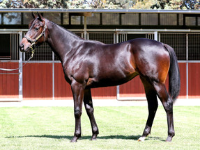 SHARES RELEASED ON MAGIC MILLIONS PURCHASES AND THEY ARE FLYING OFF THE SHELF