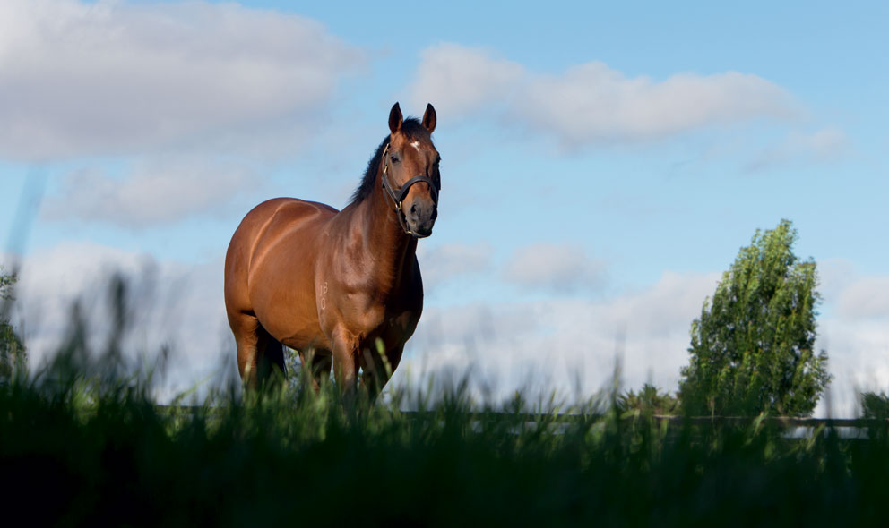 news_Reset_0148_Thoroughbred_stallion_in_paddock