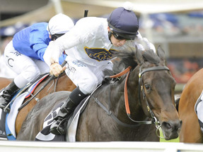 Yankee Rose looking for back to back 2YO city wins