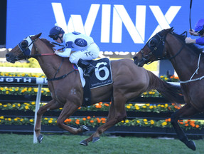 Can Samadoubt repeat his Winx Stakes heroics?