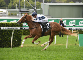 Classy filly Every chance against top colts in San Domenico