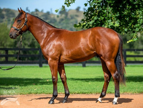 Darby Racing Fires Up at the 2017 Magic Millions