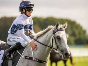 Greysful Glamour a gorgeous mascot for Darby Racing