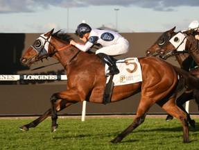 Irithea chasing $1milllion milestone in the Sydney Stakes