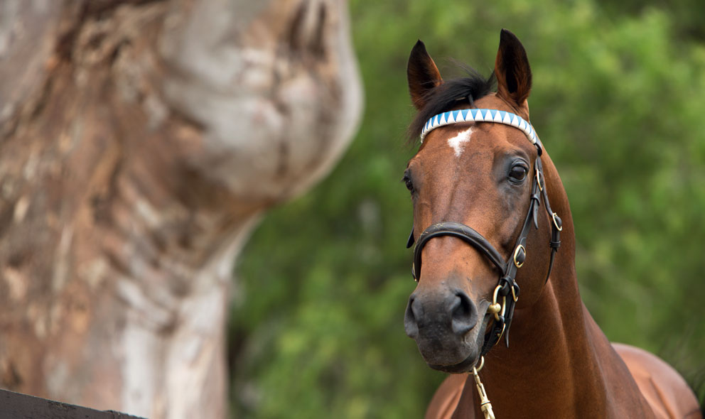 news_Reset_0780_Thoroughbred_stallion