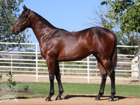 Darby Racing EXCEL at the 2019 Magic Millions Yearling sale