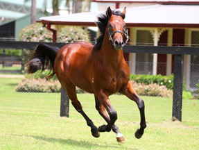 The Warlord breaks through, fulfilling a life long dream for passionate owner - 'Phillip Heath&#