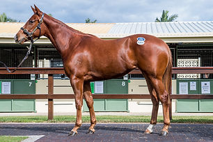 Lot 1286, Deep Field x Orutan, Filly, Ga