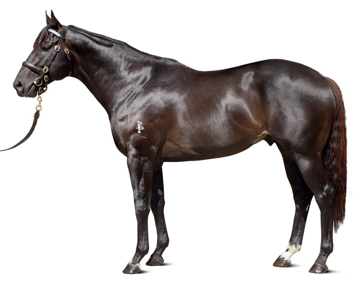 conformation_Brazen_Beau_0119_thoroughbred_stallions