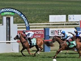 Forward run works a treat for Brad Widdup's Miss Magnum in maiden Tyers Park success