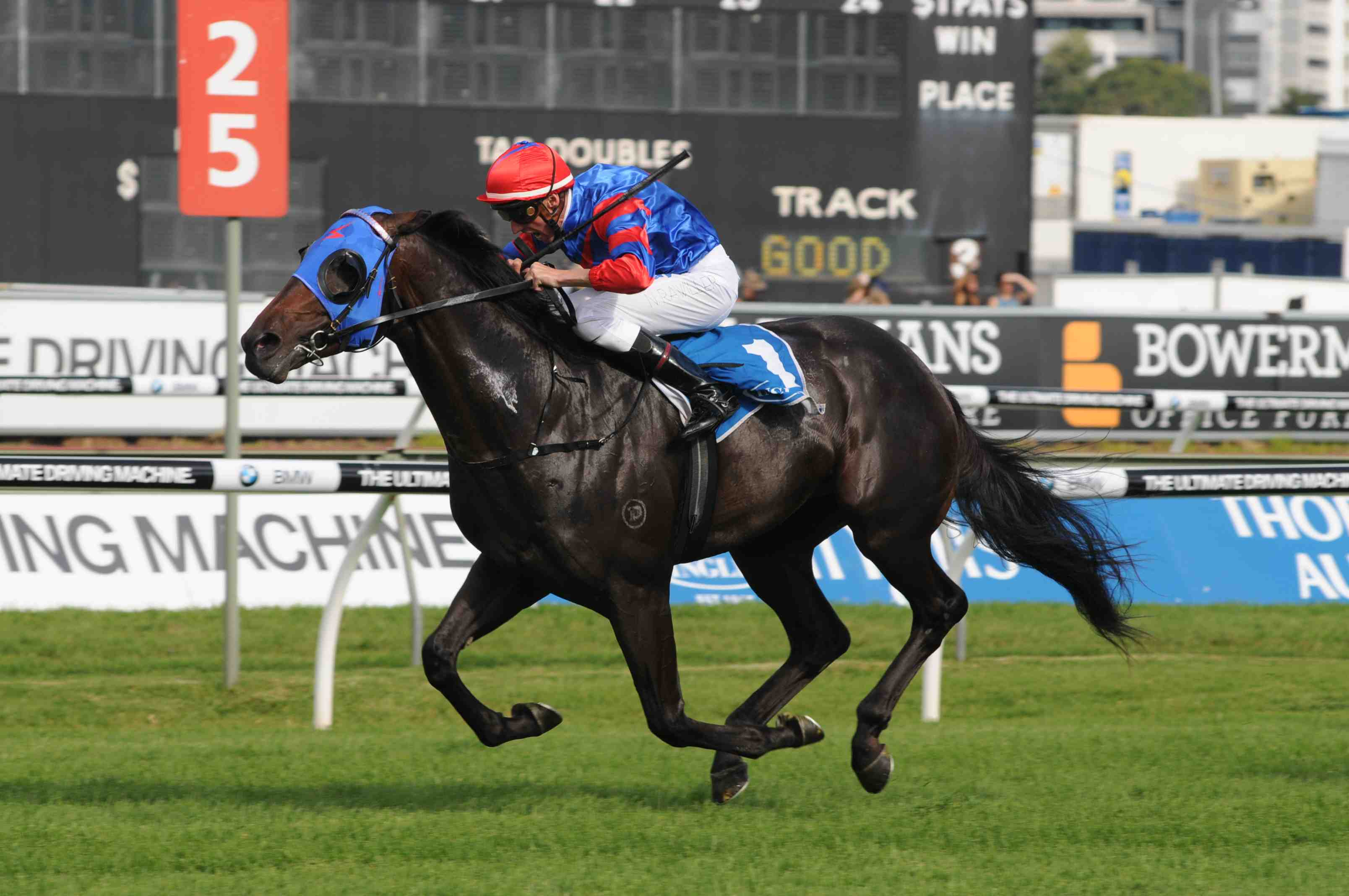 Pierro_Sires_Small