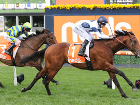 Malkovich returns to Caulfield for some black-type