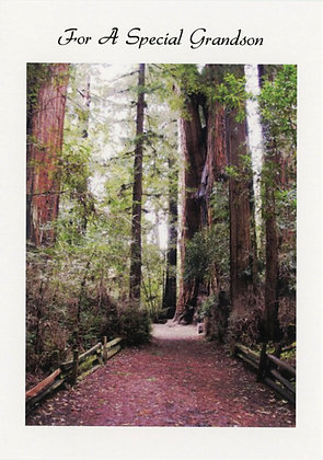 For A Special Grandson - Redwoods Felton, CA, GS2