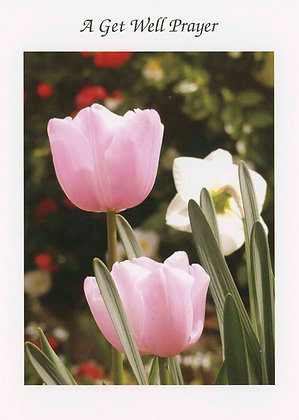 A Get Well Prayer - Tulips GW4