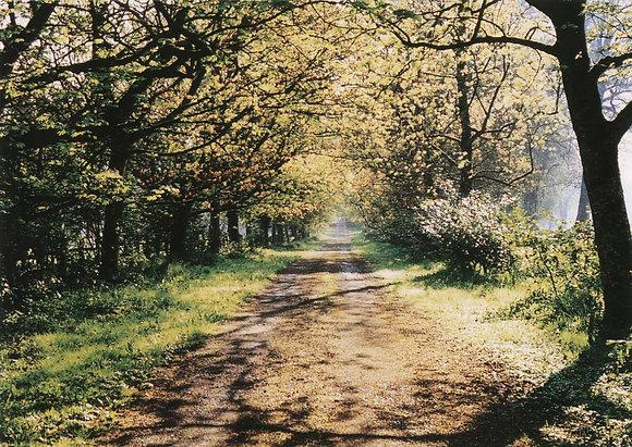 Life's Path LP1