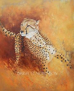 cheetah 100x80