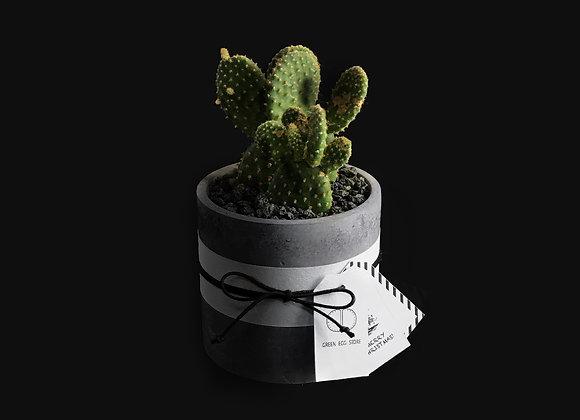 Cactus in Concrete Pot 仙人掌連水泥花