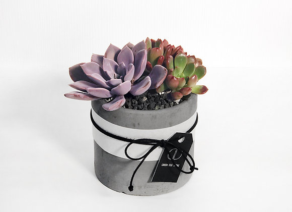 Succulents in Concrete Pot 多肉植物連水泥花盆