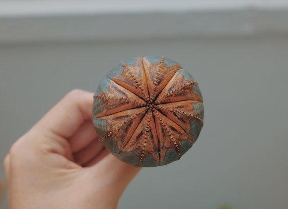 生繡布紋球連盆