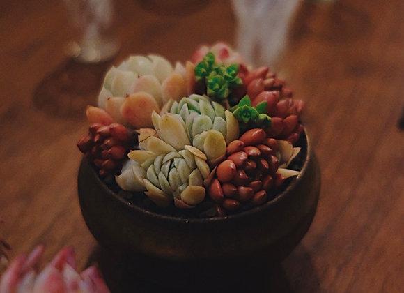多肉植物拼盆 x Yusuke Wakasa