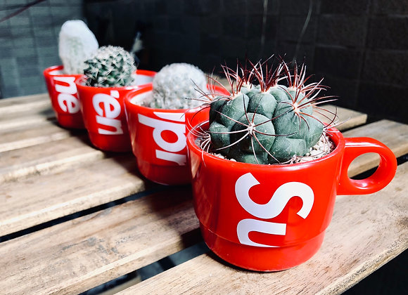 Cactus in Supreme Stacking Cup | Supreme仙人掌杯