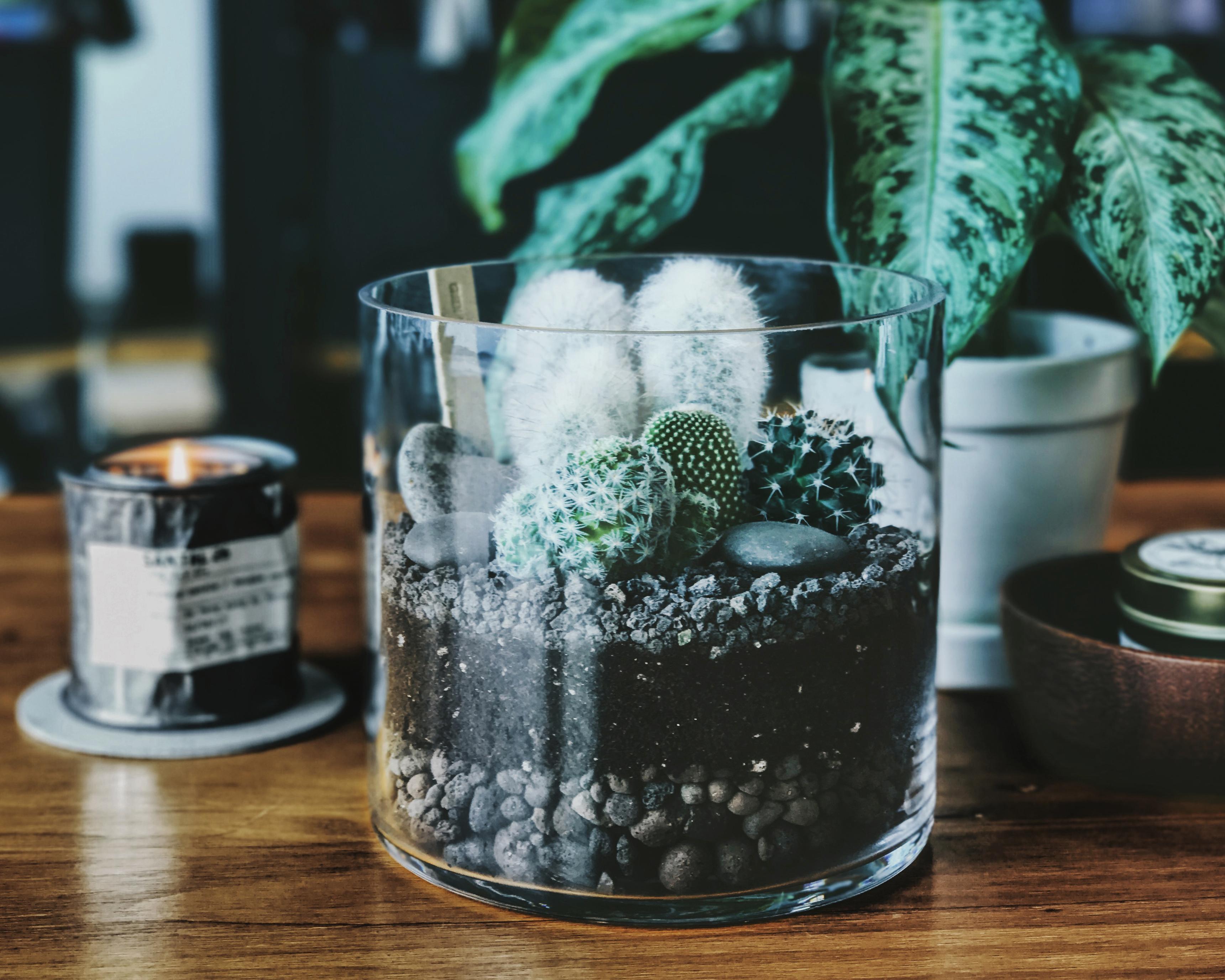 cactus_terrarium