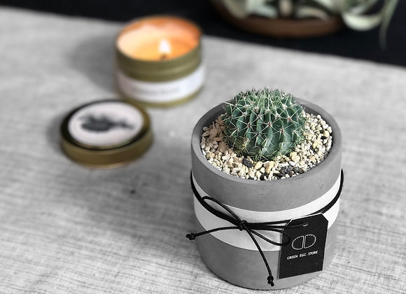 Cactus in Concrete Pot 仙人掌水泥盆栽