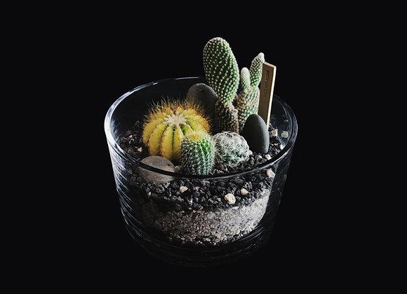 Cactus Terrarium 仙人掌盆景