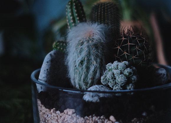 Succulent Terrarium 多肉植物盆景