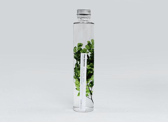 Slow Pharmacy - Plant Specimen 200ml