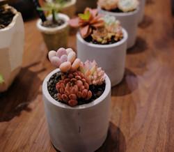greeneggstore_succulents