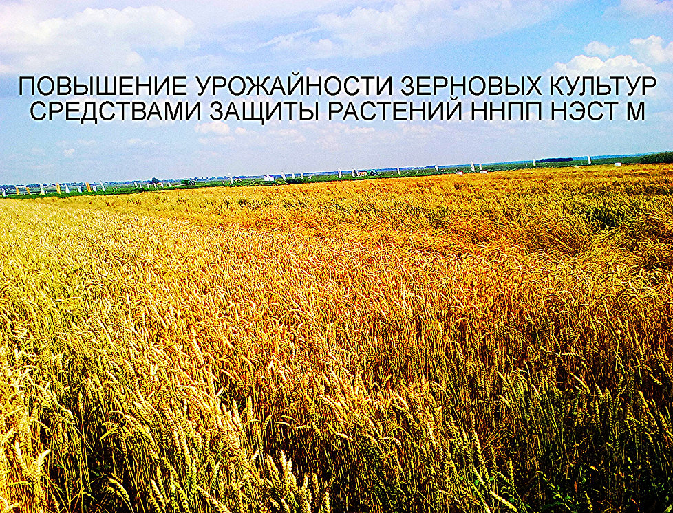 ОКВЭД - Выращивание зерновых и зернобобовых культур 72