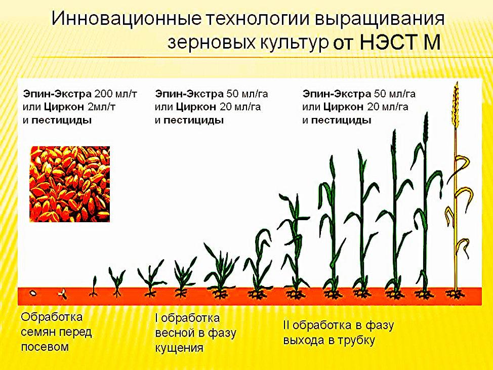 ОКВЭД - Выращивание зерновых и зернобобовых культур 41