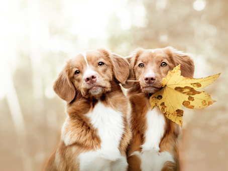 Getting through the fall season with your dog