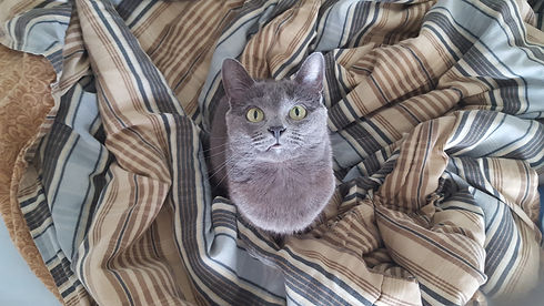 gray cat 2 - Copy.jpg