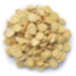 Astragalus-1.jpg
