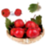 Chinese-Hawthorn.jpg