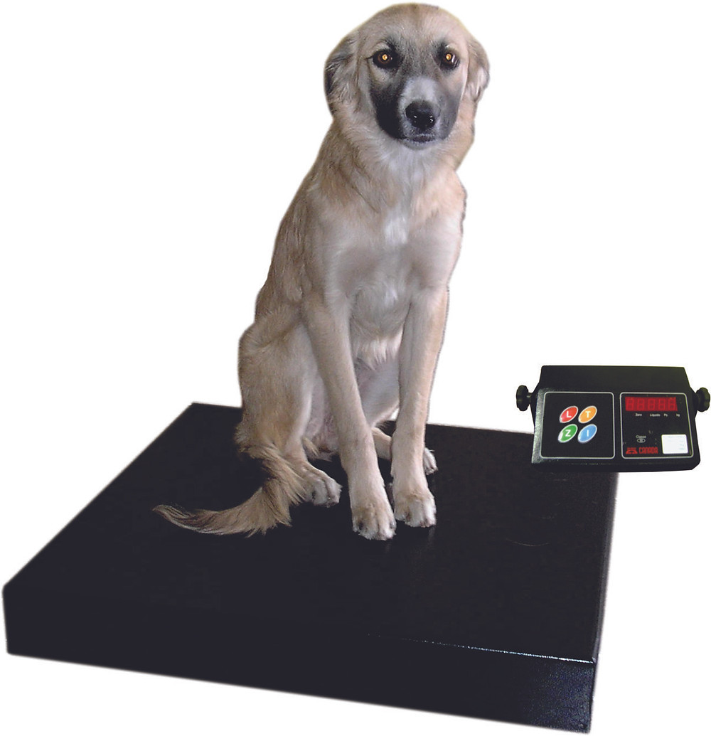 balança veterinária