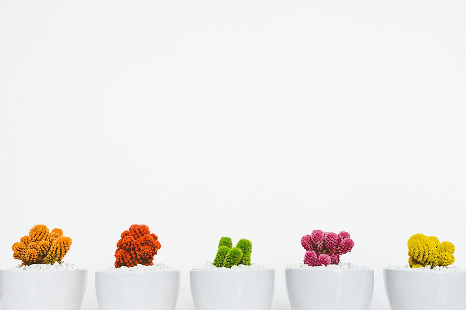 flower pots with colorful plants