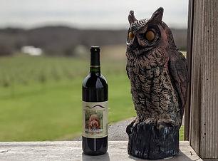 We Love NC April Brandon Hills vineyard.