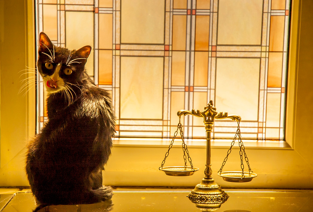 Tuxedo cat sitting next to the scales of justice in front of a stained glass window.