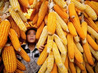 Что съесть, чтобы не заболеть? Осенние советы от китайских медиков