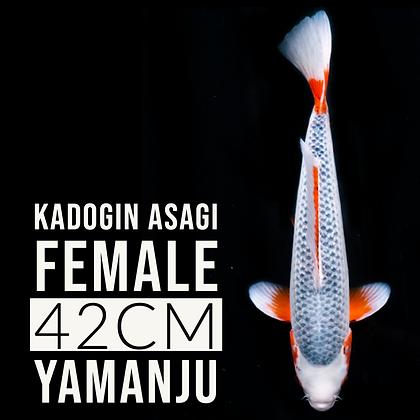 Kadogin Asagi