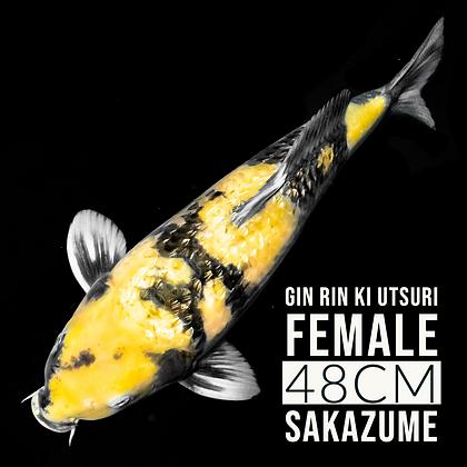 Ginrin Ki Utsuri