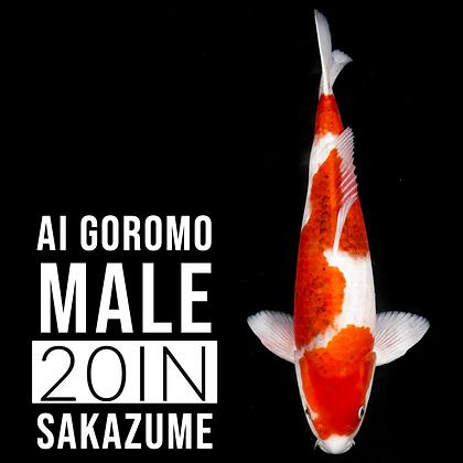 Ai Goromo