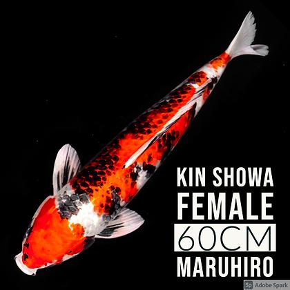 Kin Showa